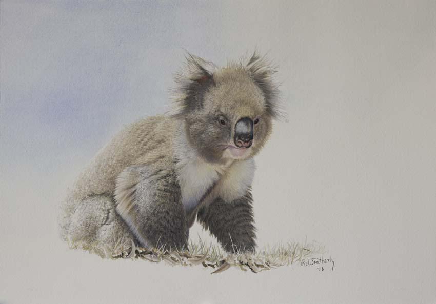 Richard Weatherly Portfolio Koala