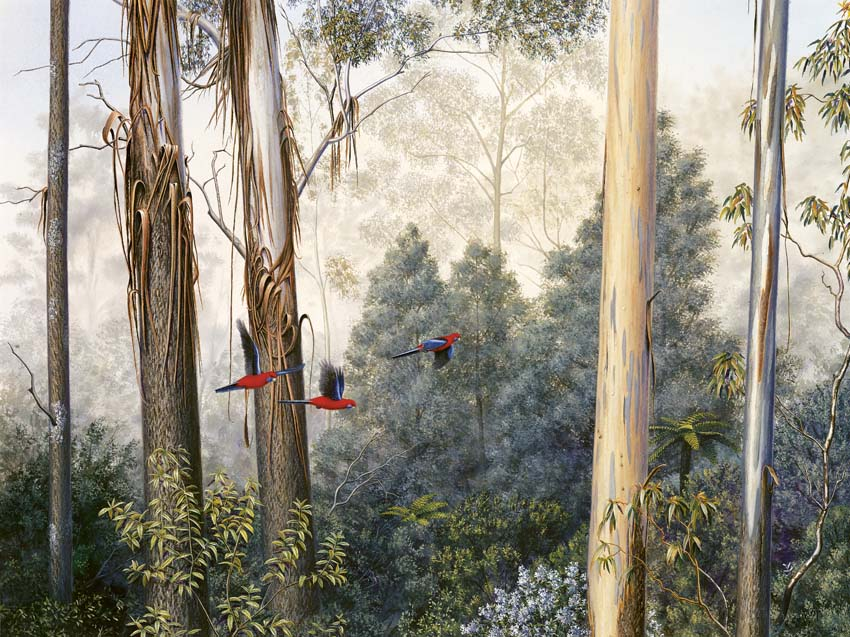 Mountain Ash and Crimson Rosellas