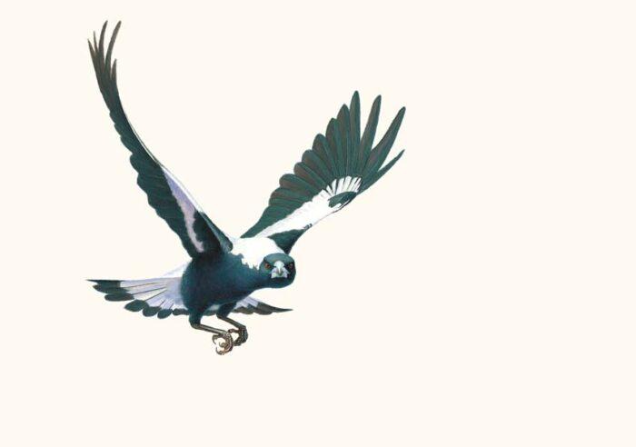The Malevolent Magpie